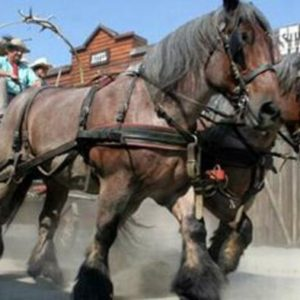 FOTO CARROZZA COWBOYS